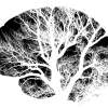 Una proteína, bastión de la supervivencia de las neuronas durante la vejez