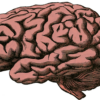Primeros signos del párkinson en el cerebro